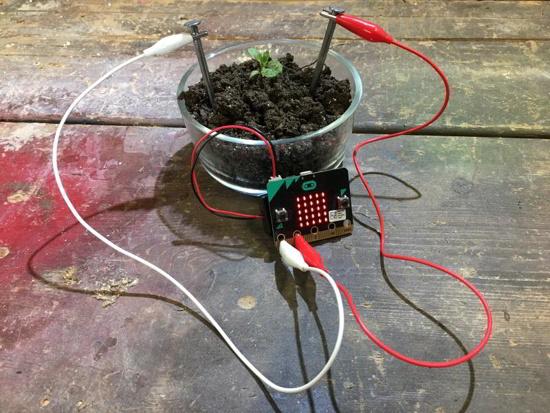 Micro:bit zur Überwachung einer Pflanze