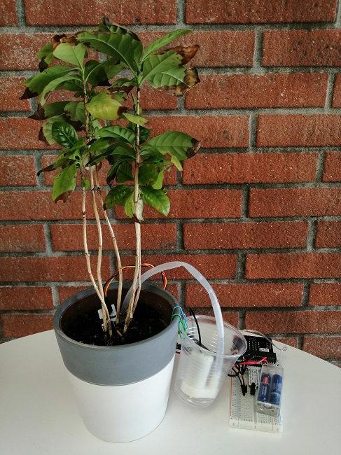 Fabriquez un système d'arrosage intelligent avec micro:bit !